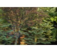 A Beautiful Blur Photographic Print