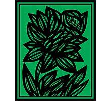Specchio Daffodil Flowers Green Black Photographic Print