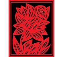 Komlos Daffodil Flowers Red Black Photographic Print