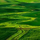 Ribbons of Green by DawsonImages