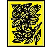 Shinney Daffodil Flowers Yellow Black Photographic Print