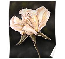 """""""White Rose"""" - Oil Painting Poster"""