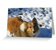 Queenie Wondering What the White Stuff Is?! Greeting Card