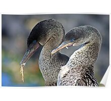 Flightless Cormorants Poster