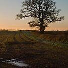 One frosty morning by peteton