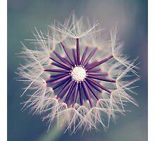 fluffy sun Photographic Print