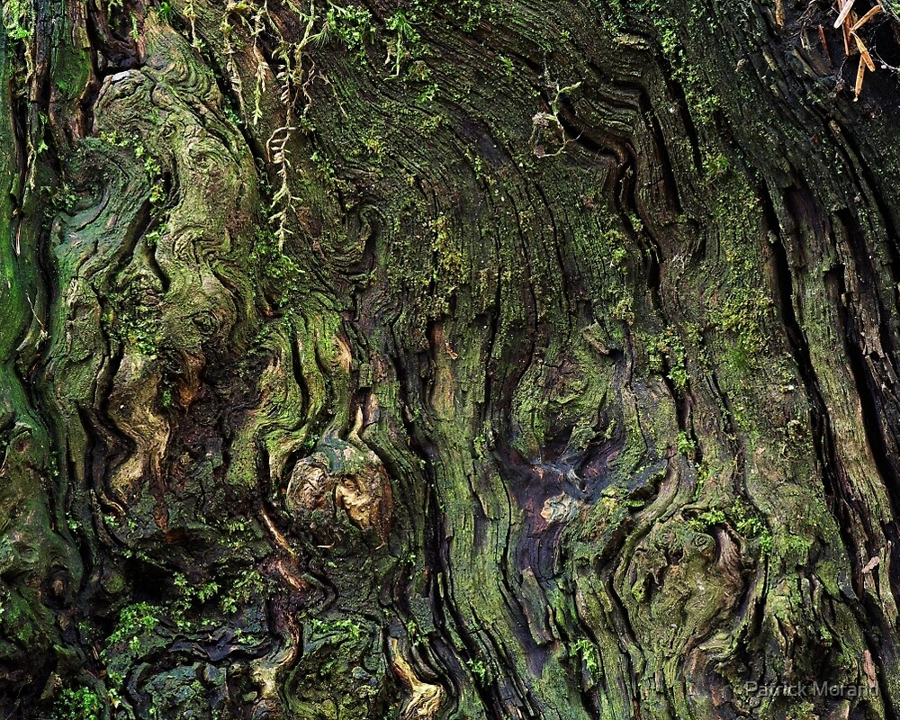Woodscape by Patrick Morand