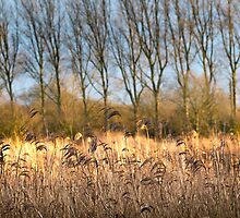 Riverbank in Flower by James  Key