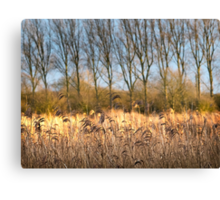 Riverbank in Flower Canvas Print