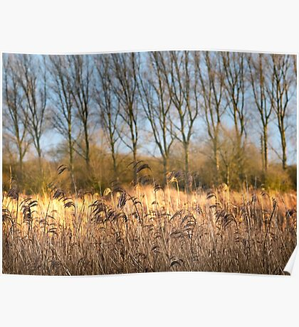 Riverbank in Flower Poster