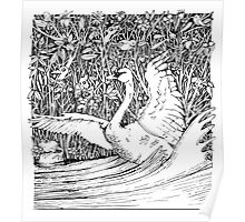 Swan Splash Poster