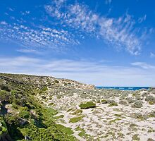 Seal Bay - Kangaroo Island by AllshotsImaging