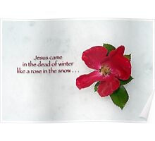 Jesus came in the dead of winter like a rose in the snow Poster