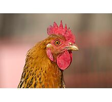 hen in the farm Photographic Print