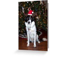 Champ's 1st Christmas Greeting Card
