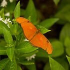 Orange Butterfly by Jay Gross