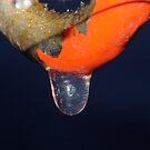 Frozen Droplet..... by Larry Llewellyn