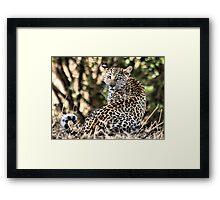 THE LEOPARD - Panthera pardus - Luiperd Framed Print