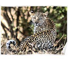 THE LEOPARD - Panthera pardus - Luiperd Poster