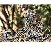 THE LEOPARD - Panthera pardus - Luiperd Photographic Print