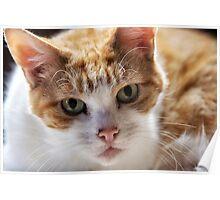 Cat's eyes Poster