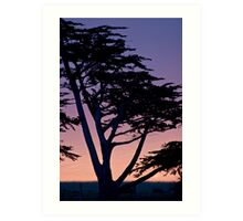 Tree at sunset- Cambria Art Print