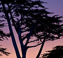 Tree at sunset- Cambria by David Chesluk