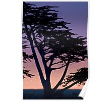 Tree at sunset- Cambria Poster