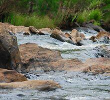 Boulder Cascades - Manning River NSW by Bev Woodman