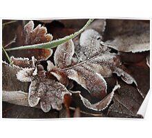 Winter Oak Leaf Poster