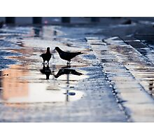 after rain Photographic Print
