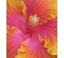 Sweet Hibiscus Photographic Print