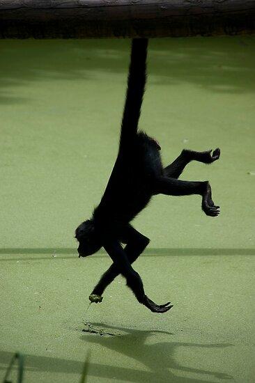 Acrobatic Move by Brendan Schoon