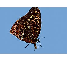 Erfly..working 9-5 Photographic Print