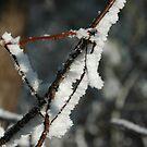Frost by Brendan Schoon