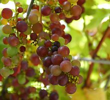 Grapes by Brendan Schoon