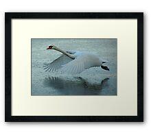 Flying Swan Framed Print