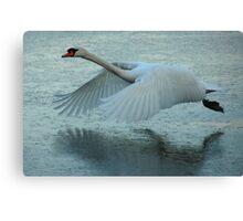 Flying Swan Canvas Print