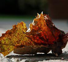 Fallen Leaf by Brendan Schoon