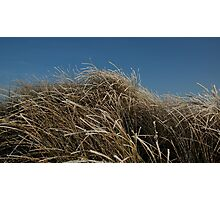 Frozen Dune Grass Photographic Print