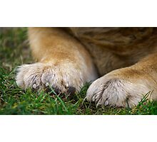 Chow dog paws Photographic Print