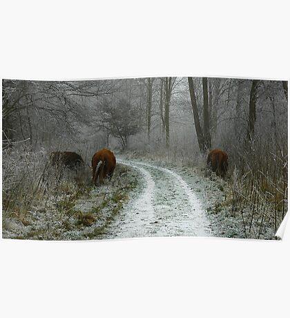 Winter's Survivors Poster