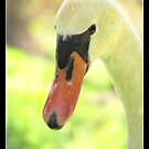 once was an ugly duckling by chen cohen