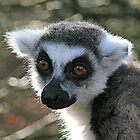 Ring Tailed Lemur by Ladymoose