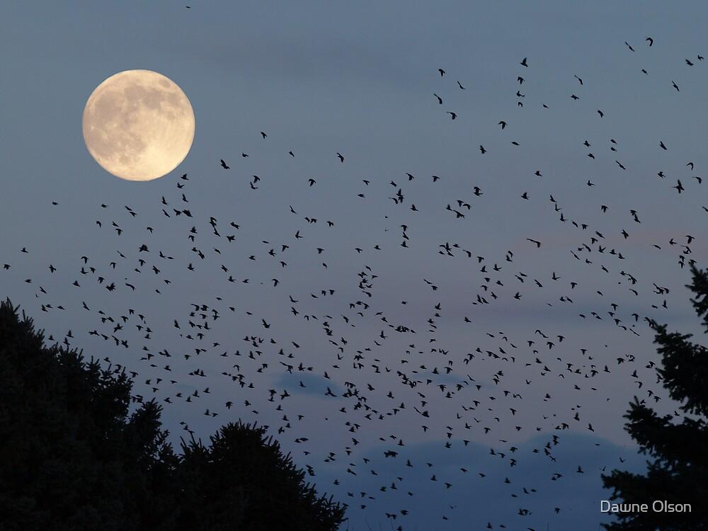 Moonlit Frenzy by Dawne Olson