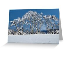 White trees and blue sky Greeting Card
