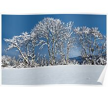 White trees and blue sky Poster