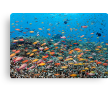 Rainbowed Sea Canvas Print