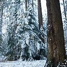 Among pines by steppeland