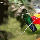 Chirping Irazu Hummer by Al Bourassa